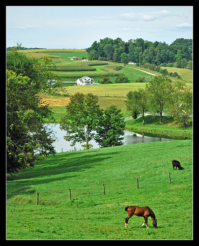 ohio horse farm ohiohills ohioamishcountry farmerstownohio