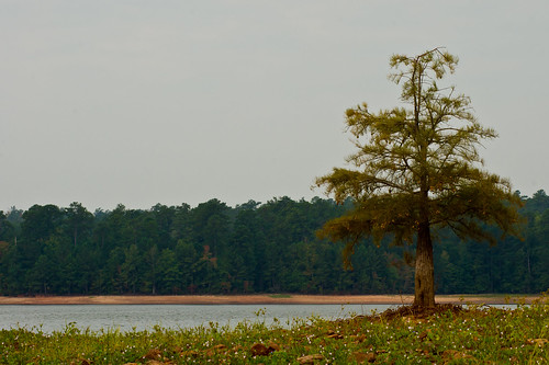 lake tree nature water georgia lagrange troupcounty westpointlake thesussman sonyalphadslra550 project36612011