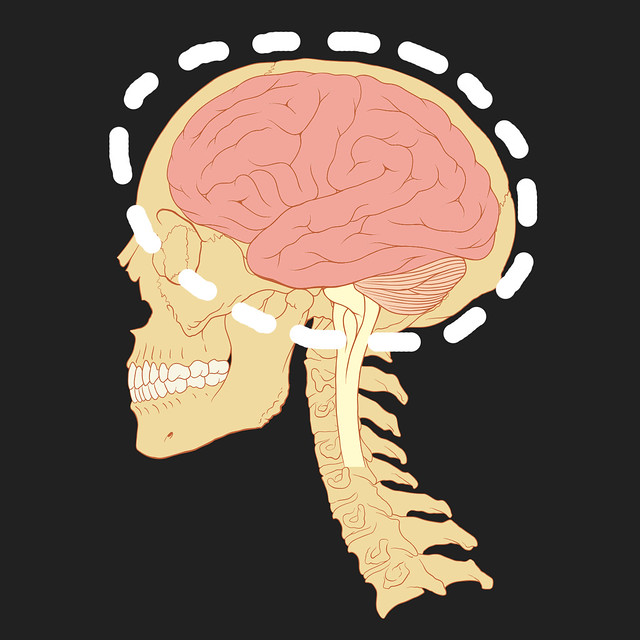 Image of brain and skull
