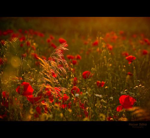 hungary niceshot természet táj fény tájkép nyár mező canonsx10