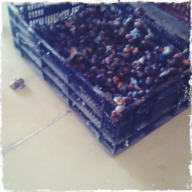 Snails in a tray