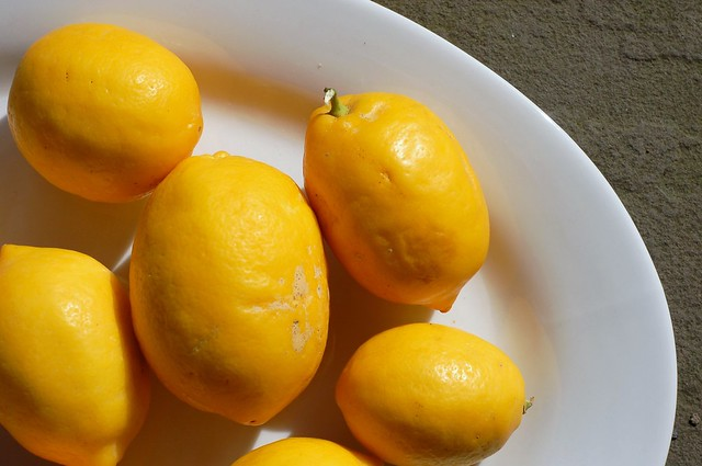 Meyer lemons from Josephine Street by Eve Fox, Garden of Eating blog, copyright 2011