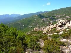 Versant Ouest de Castellu Muratu : le versant de montée depuis la crête du ruisseau de Castellu Muratu
