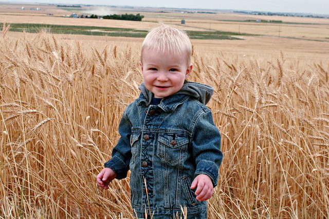 My Little Farm Boy