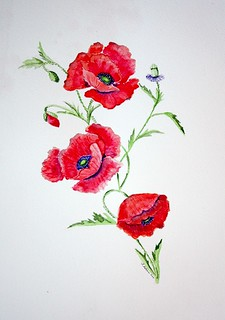 Poppies -Take 2