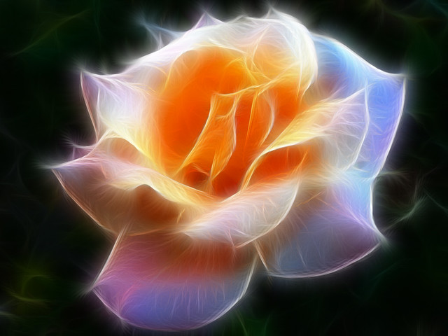 Fantasy Rose Fractalius | Made with Photoshop software ...