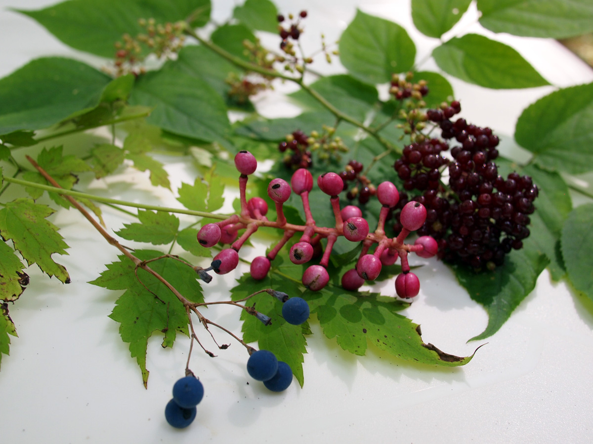 Various Berries in the Woods