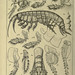 An account of the Crustacea of Norway. v.1 Amphipoda (plates)