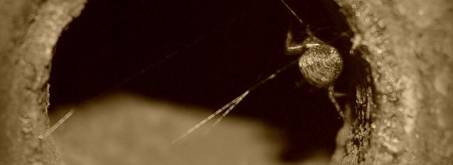 Urbex spider