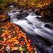 Oregon Brook Autumn by Joseph Rossbach(www.josephrossbach.com)