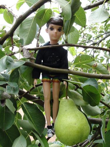 he's an avid tree climber, by googoojue | Flickr
