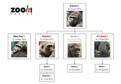 Gorilla Family - Zürich (Version 1)
