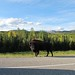 Small photo of Alaska Highway