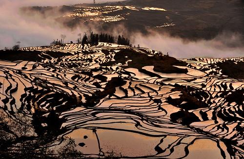 china reflection field sunrise landscape dawn golden village terrace yunnan 風景 中國 yuanyang 日出 鄉村 雲南 田園 倒影 梯田 金黃 元陽 元陽梯田