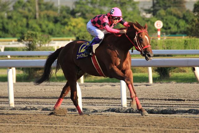 日本テレビ盃勝ち馬 スマートファルコン(武豊)