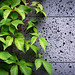free rooftop garden wallpaper