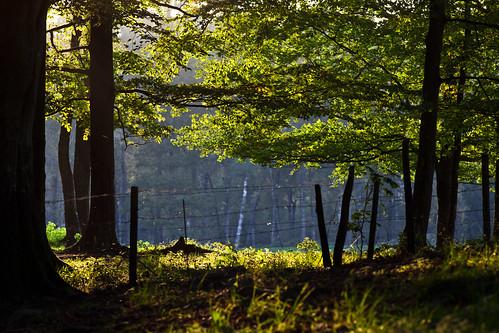 tree forest fence skåne sweden f80 skåne 2011 stehag ef200mmf28lusm canoneos5dmarkii ⅛sek
