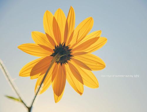 Last rays of summer sun * Explore *