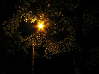 (271/365) Canopy