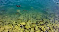 Рыбы озере Wörthersee