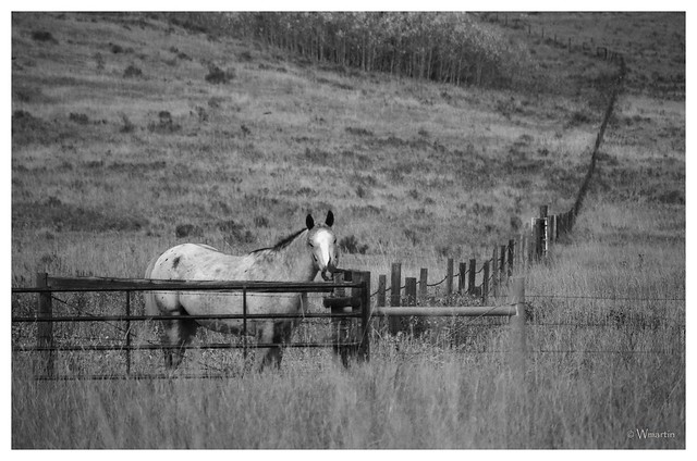 Glenbow Ranch - horse in the field