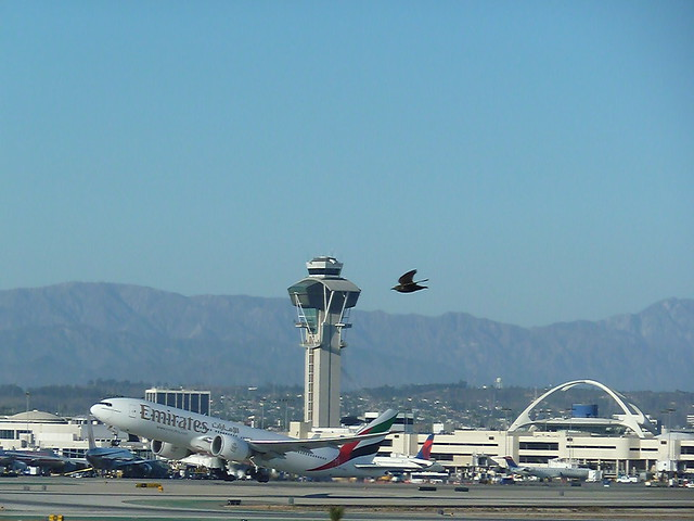 Unfair race @ LAX a small bird VS an Emirates Airlines Boeing 777 jet!