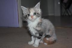 Edith (born 13/08/2011)