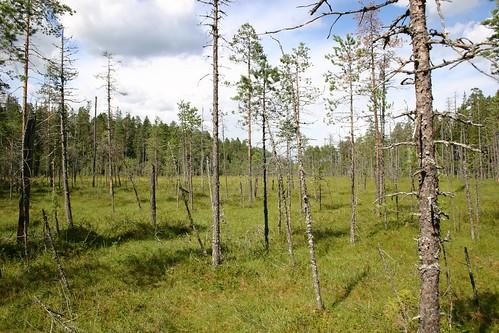 landschaft xseechpublic