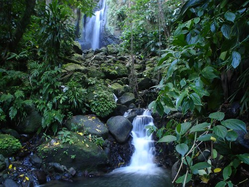 Photo by 3 Rivers & Rosalie Forest Eco Lodge, Dominica