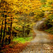 Autumn Drive by cindygraphics