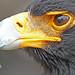 eagle 2 by Glenn 07