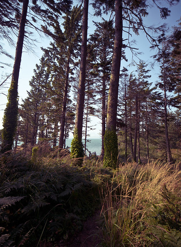 ocean travel trees panorama plants usa nature beauty grass forest iso100 washington woods path noflash september trail pacificocean 24mm tallgrass southbend locale 2011 manualmode canoneos1dsmarkii camera:make=canon geo:state=washington exif:make=canon exif:iso_speed=100 exif:focal_length=24mm objectsthings hasmetastyletag naturallocale adjectivesfeelingdescription haslenstype selfrating3stars 1250secatf80 september112011 geo:countrys=usa exif:model=canoneos1dsmarkii camera:model=canoneos1dsmarkii exif:lens=240mm exif:aperture=ƒ80 subjectdistanceunknown 2011travel canontse24mmf35liitiltshift cannonsunsetbeachoregon0909201109112011 haleyadamsengagement geo:lat=46635070200002 geo:lon=1239588074 geo:city=southbend 46°38625n123°573171w southbendwashingtonusa