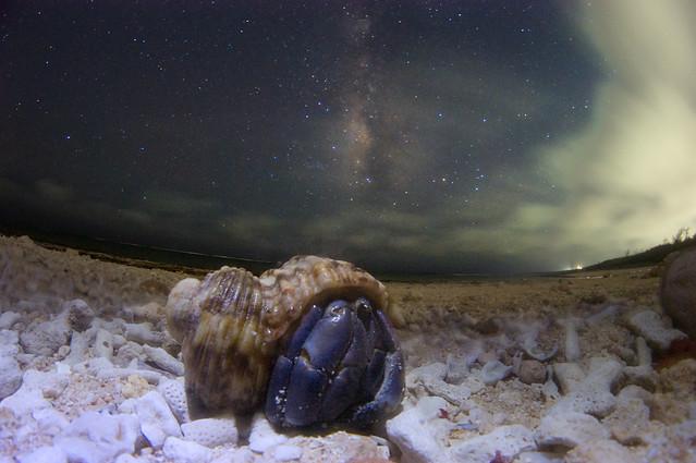 Milky Way Hermit crab
