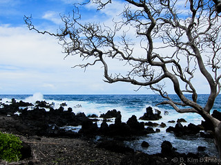 Near the Hana Road