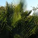 Palmas - Palm leaves;  al norte de Santiago Chazumba, Oaxaca, Mexico por Lon&Queta