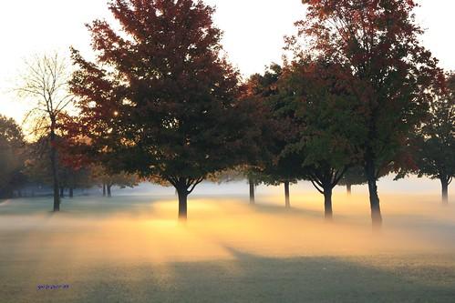 park fog sunrise canon coolmorning bussewoods rollingmeadowsil chicagosubarbs