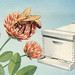 Bee, Three Flowers, HP Laser Printer