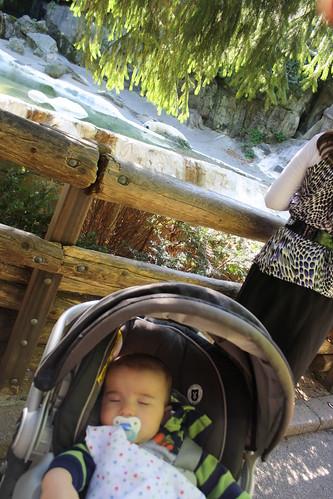 Bronx Zoo 2011