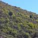 Hillside vegetation - Fora del cerro; camino de Santiago Yucuyachi a San Martín del Estado, Oaxaca, Mexico por Lon&Queta