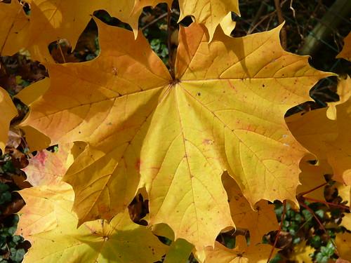 Leaves Autumn 065