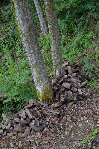 forest star cabin ky daniel september national boone teaser redrivergorge slade 2011