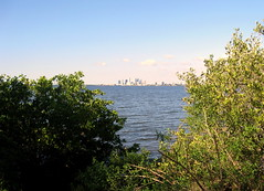 Tampa - Ballast Point Park - Downtown Tampa Skyline Across Hillsborough Bay - Through The Bushes