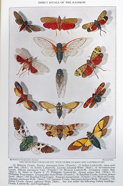 Plate VII - Insect Rivals of the Rainbow