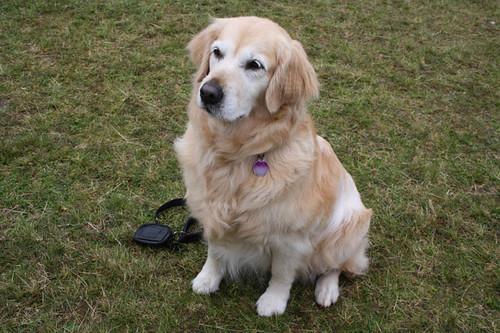 SIT.... STAY.... GOOD DOG!!!!!!!