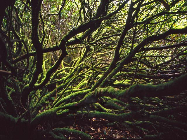 scottish jungle