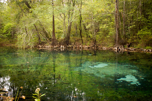 park water spring florida clear springs freshwater hightowersprings
