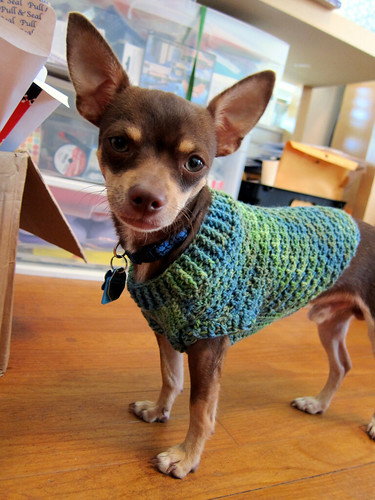crochet dog sweater pattern chihuahua pakbit for. Black Bedroom Furniture Sets. Home Design Ideas