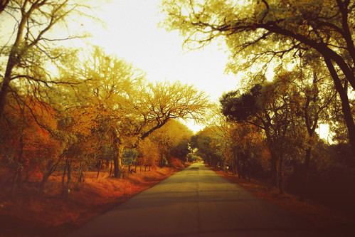 road autumn trees color fall nikon seasons coolpix change vanishing s8100
