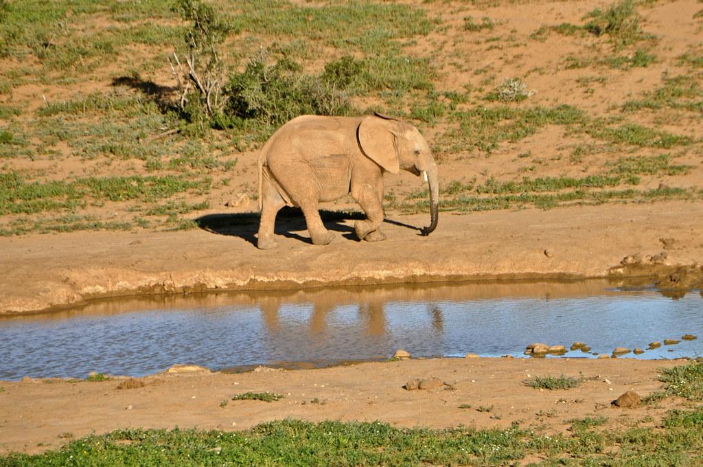 Addo Elephant National Park
