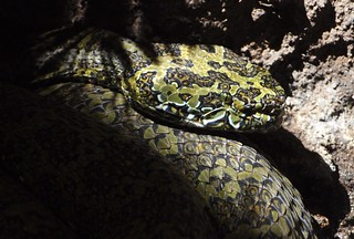 large-snake2